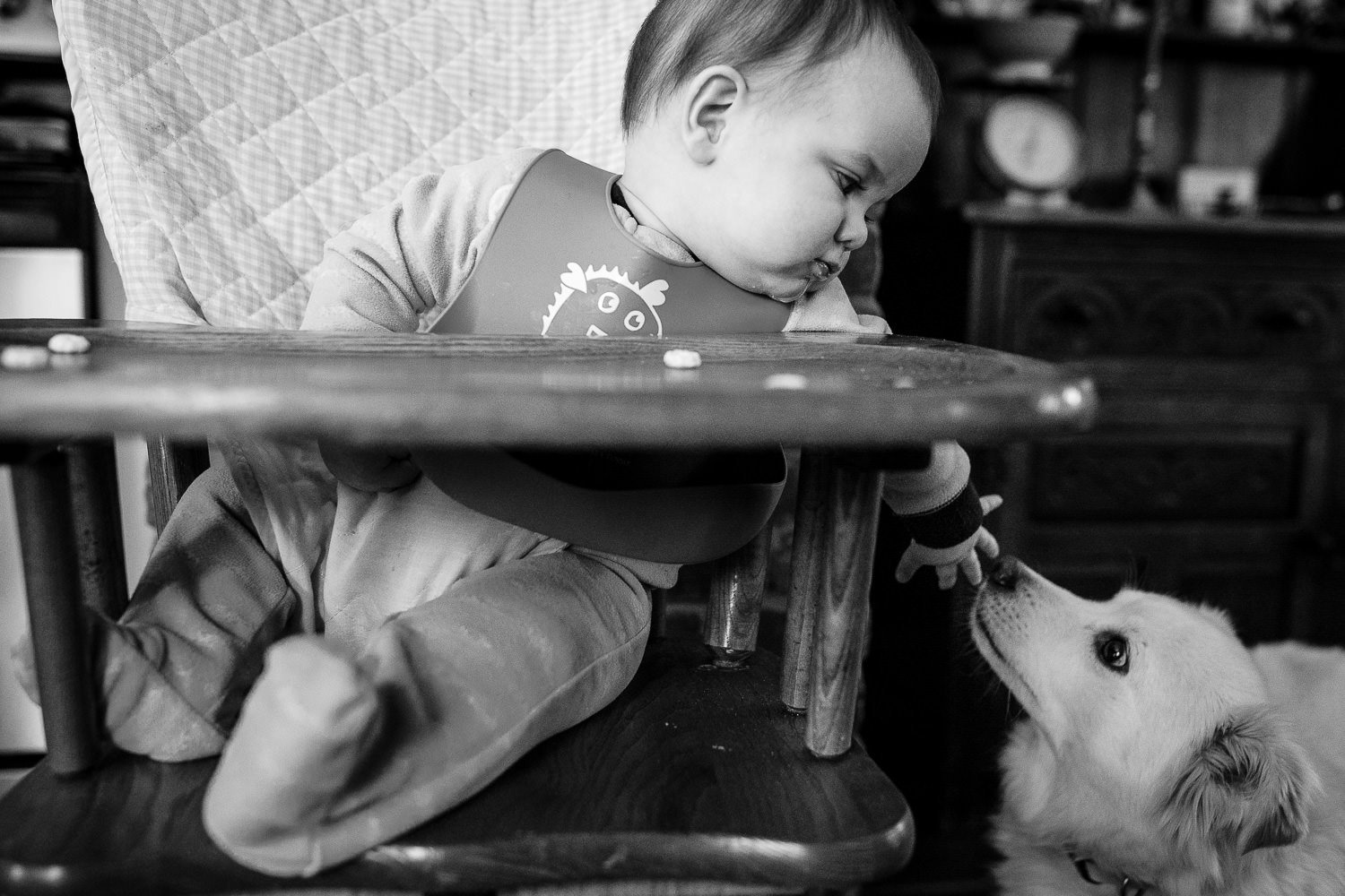 A baby in a high chair leans over to feed dog during day in the life family photography session in east greenwich rhode island