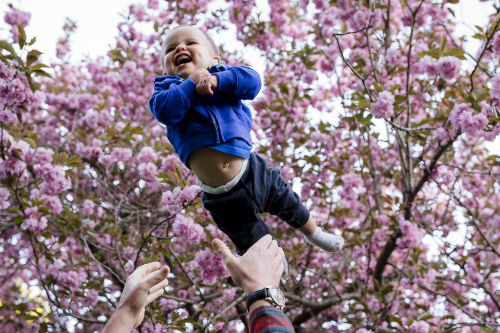 Little boy wearing blue sweatshirt flies through the air beneath a pink flowering tree during rhode island photo session