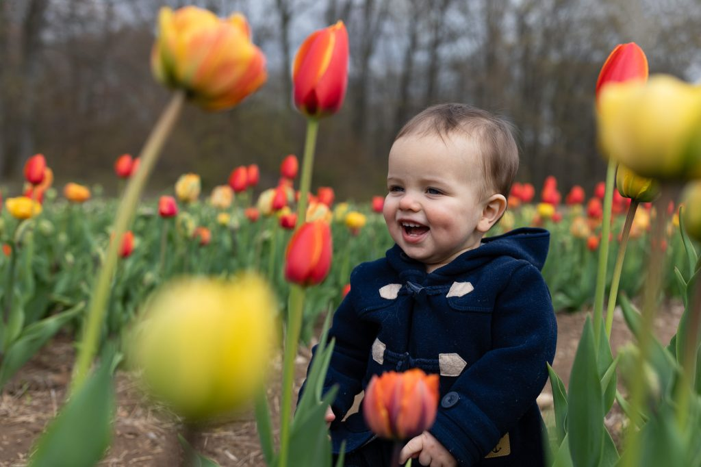 A one year old boy laughs amidst a field of orange and yellow tulips during family photos at wicked tulip farm in RI