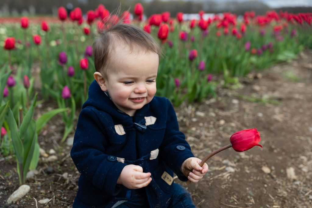 A little boy smiles and holds a tulip during family photos at wicked tulip farm in RI