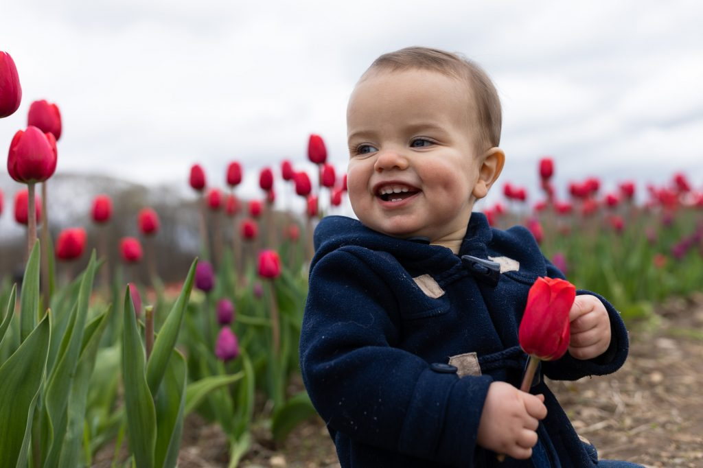 A one year old boy in a blue pea coat holds a red tulip and smile sitting in a field of tulips at wicked tulip farm in RI