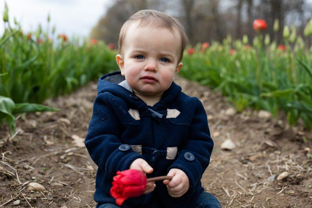 A documentary portrait photo of a little boy in blue pea coat in a row of tulips in Rhode Island