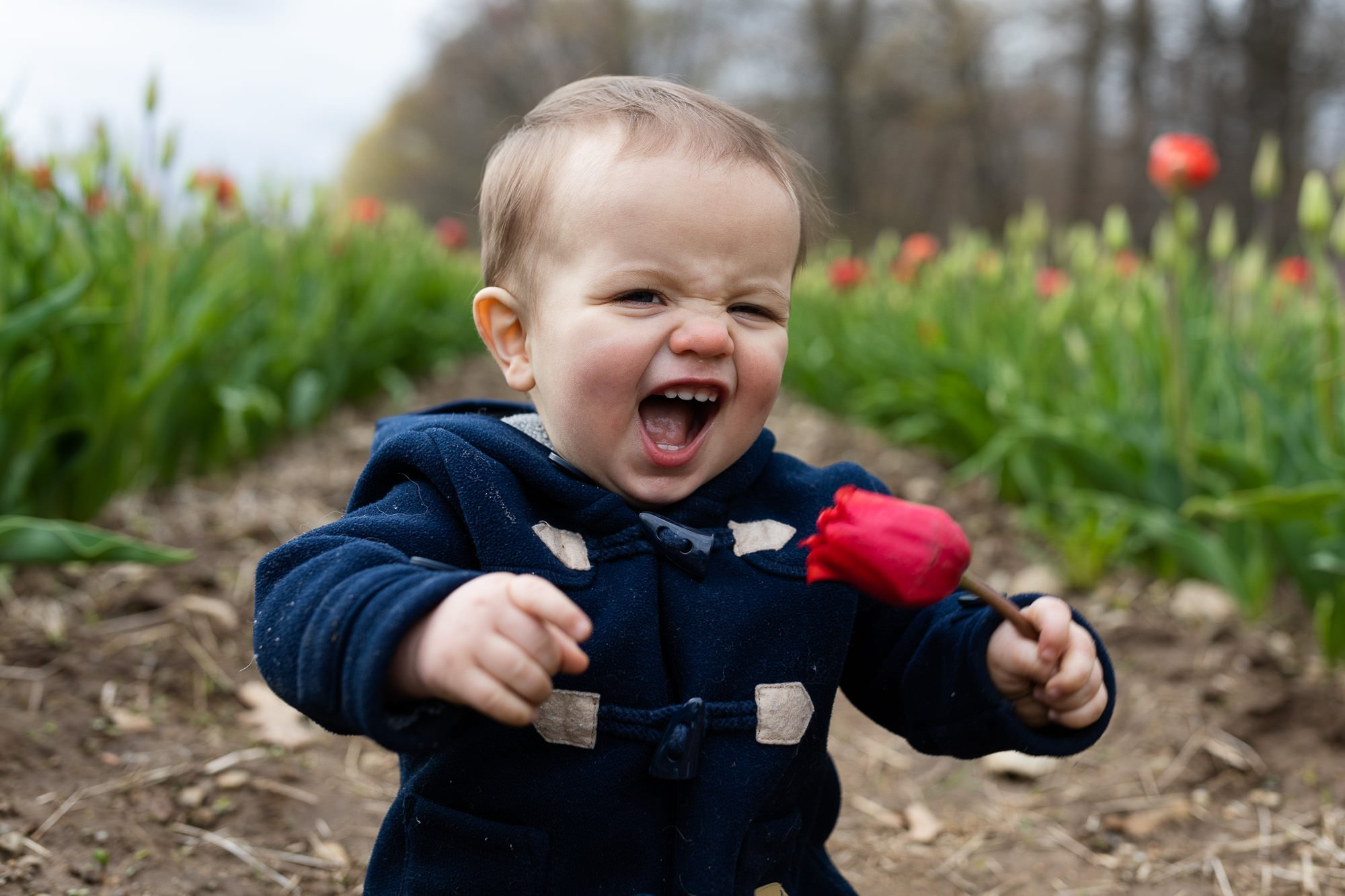 A little boy laughing hysterically holding a tulip during a Rhode Island documentary family photo session