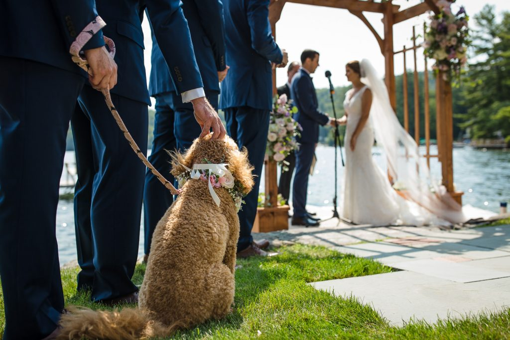 A goldendoodle dog watches her parents wedding ceremony on Merrymeeting Lake in the Lakes Region of NH