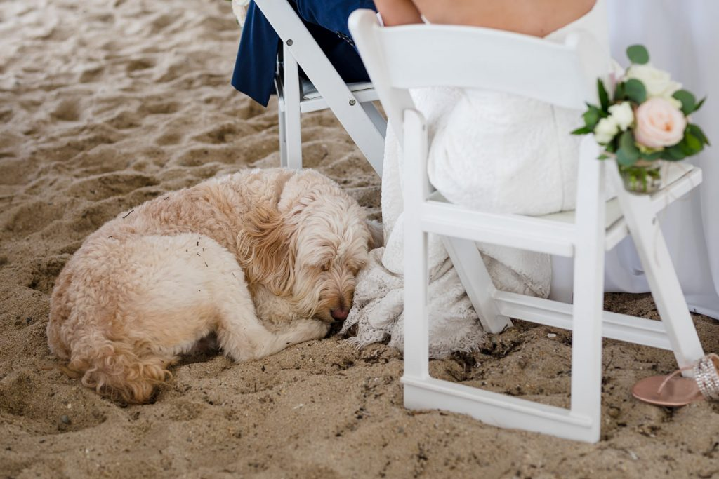 A dog curls up in the sand underneath the head table at a kalmar village wedding