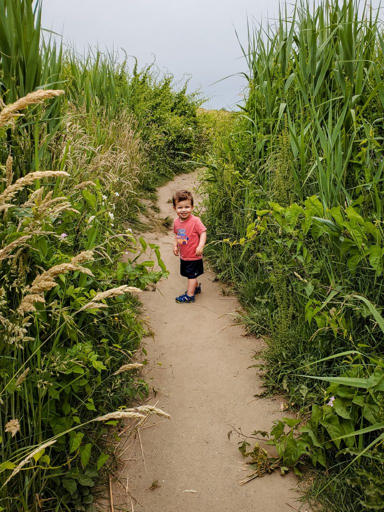 A boy in a pink shirt walks through a sandy path with tall wildflowers on either side