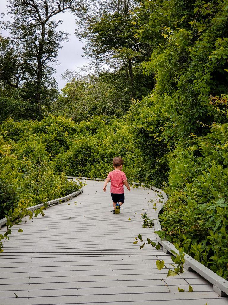 A boy in a pink shirt walks down a windy wooden boardwalk through marshlands on cape cod